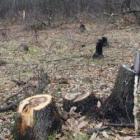 Перничанин ще отговаря за нерегламентирана сеч на дърва 09_1475209537