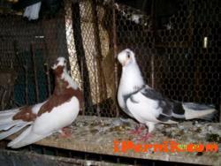 Седмо училище представят любимите си птици в състезание 10_1382730683