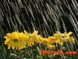 Днес следобяд дъжд и гръмотевици атакуваха град Радомир и околностите му 06_1402497648