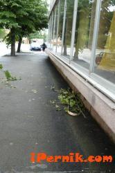Липите в Перник се потрошават от цигани 06_1404109800