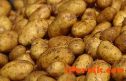 Събирането на картофите в Трънско се забавя 09_1410247073