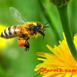 """Пчеларите трябва да затворят кошерите си, защото почва пръскане срещу """"син език 09_1410342259"""