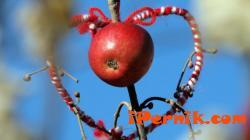 Продават благотворително сурвачки в Перник 01_1420805324