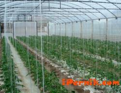 Собствениците на оранжерии се вдигнаха на бунт 01_1420808312