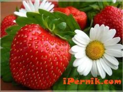 Испания търси по-млади берачки на ягоди 01_1421070376
