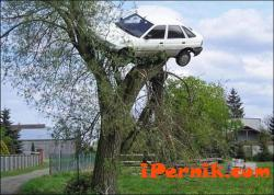 Ще отрязват опасните дървета край пътя 01_1421851106