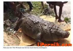Крокодил умря от преяждане 02_1423752823