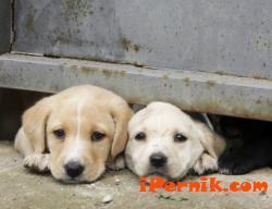 В столицата са платили близо четвърт милион на ухапани от кучата за две години 02_1424096020