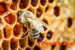 Пчелните семейства измират, пчеларите искат помощи 02_1424788206