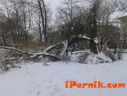 Отрязаха опасни дървета 03_1425968301