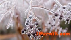 Краят на зимата е близо 03_1425975718