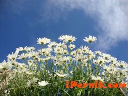 Днес ще бъде слънчево 03_1427782672