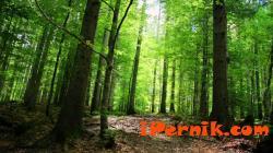 Разясняват дейностите и услугите на горите 03_1427783408
