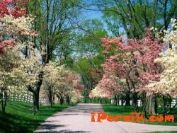 До средата на април ще е студено 03_1427810264