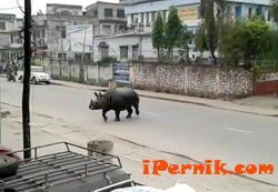 Изплашен носорог уби поне един човек в Непал 04_1427969740