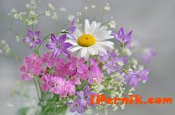 Общинският младежки дом организира отбелязването на Цветница 04_1428043254