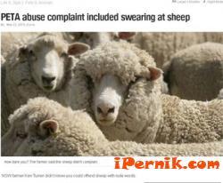 Обвиниха фермер в Австралия, че псувал овцете си 05_1432627771