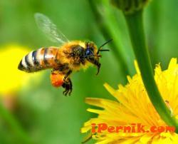 Рояк пчели нападна майка и бебето й в пловдивско село 06_1434542880