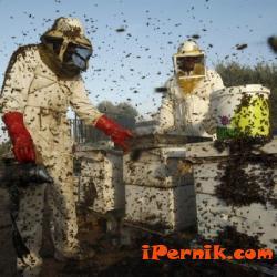 Пчеларите ще могат да подават документи за финансова помощ до  22 юни 06_1434610178
