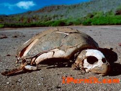 Започнаха масово да измират видове 06_1434789778