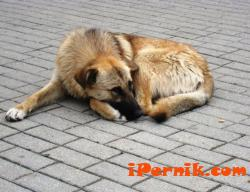 София е сред градовете с най-много осиновени безстопанствени кучета 07_1435755886