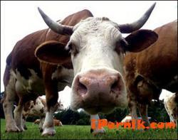Обучават фермерите за заразни заболявания при животните 10_1444654855