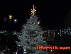 Запалиха светлините на най-високата елха в страната в Трън 12_1449907604