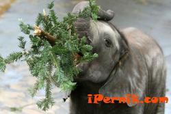Хората носят коледни елхички в зоопарка във Варна 01_1452076371