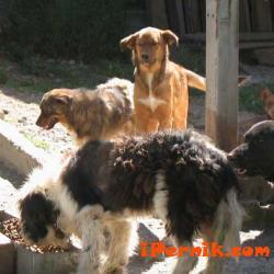 Мислят как да се справят с бездомните кучета 01_1452517198