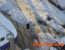 Студът намалява през следващата седмица 01_1453645179