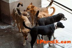 Нищят как ще се справят с бездомните кучета 01_1453646481