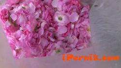 Българското розово масло се повиши 02_1454395444