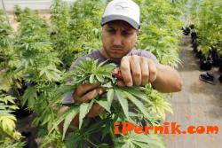 Пуснаха лекарство с канабис в Хърватия 02_1454397321