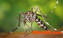 В Пловдив започват да пръскат по-рано срещу комари заради Зика 02_1454656777