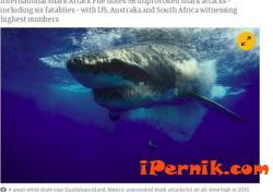 Акулите нападат все повече хора 02_1455026216