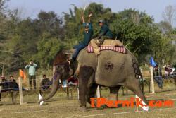 В Индия слон събори повече от сто къщи 02_1455174118