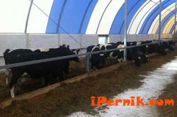 Проверяват кравето мляко у нас 02_1456131660