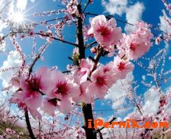 БСП-Перник организира пролетно тържаство 02_1456397996