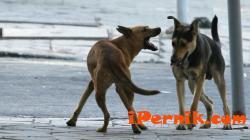 Куче нападна възрастна жена в Перник 02_1456412734