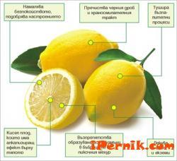 Лимонът е последното откритие срещу рак 03_1459402521