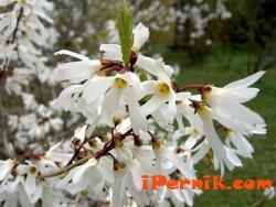 Цъфтящи растения, които създават настроение 04_1460958059