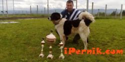 Овчарско куче от Плевен взе голямата награда от изложба в Перник 04_1461729915