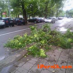 Бурята потроши дърво на улица Радомир 07_1468655007