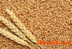 Цената на житото се понижава 07_1468743492