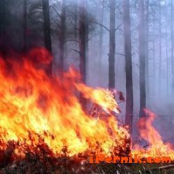 Пак има пожари в Перник 07_1469194048