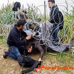 Искат да организират патрули срещу мигрантите в Перник 08_1471064217