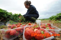 Спада броят на българите, които искат да работят в Англия 10_1476510546
