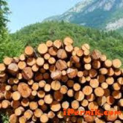 Ще определят цените на дървата в общинските гори 10_1477805289