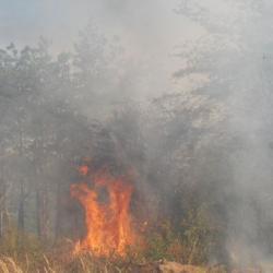 Огън е лумнал вчера 08_1502471124