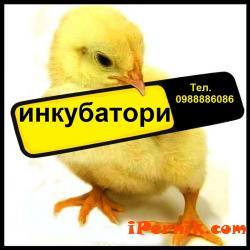 Инкубатори за люпене на яйца 10_1477470557